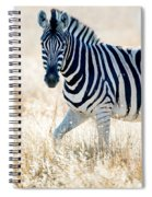 Burchells Zebra Equus Quagga Spiral Notebook