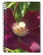 Burgundy Clematis Profile   # Spiral Notebook