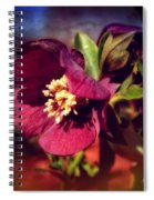 Burgundy Hellebore Flower Spiral Notebook