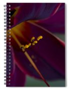 Burgundy Wine Spiral Notebook
