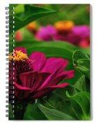 Burgundy Zinnia Spiral Notebook