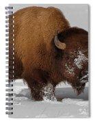 Burly Bison Spiral Notebook