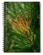 Burnished Pine Spiral Notebook