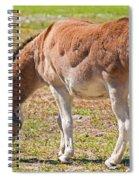 Burro Equus Asinus Spiral Notebook