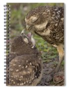 Burrowing Owl Feeding It's Chick Photo Spiral Notebook