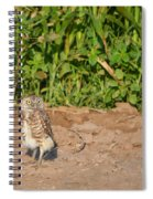 Burrowing Owl IIi Spiral Notebook