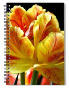 Burst Of Color Spiral Notebook