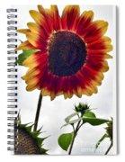 Burst Of Sunflower Spiral Notebook