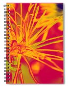 Bursting Happiness Spiral Notebook