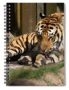Busch Tiger Spiral Notebook