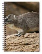 Bush Hyrax 2 Spiral Notebook