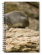 Bush Hyrax  Spiral Notebook