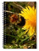 Bussy Bee And Dandelion Spiral Notebook