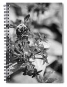 Busy Bee - Bw Spiral Notebook