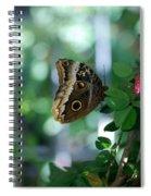 Buterfly 4 Spiral Notebook