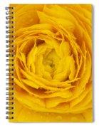 Buttercup Macro Spiral Notebook
