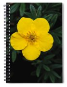 Buttercup Spiral Notebook