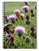 Butterflies And Bull Thistle Wildflowers Spiral Notebook