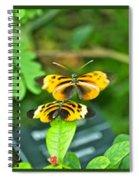Butterflies Gentle Courtship  3 Panel Composite Spiral Notebook
