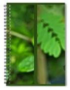 Butterflies Gentle Courtship 4 Panel Composite Spiral Notebook