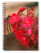 Butterfly 1 Spiral Notebook