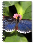 Key West Butterfly 3 Spiral Notebook
