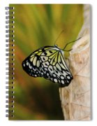 Butterfly 3 Spiral Notebook