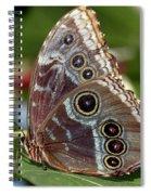 Butterfly 4 Spiral Notebook