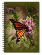Butterfly 5 Spiral Notebook