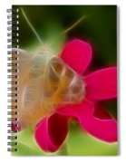 Butterfly-5288-fractal Spiral Notebook