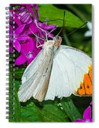 Butterfly 63 Spiral Notebook