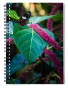 Butterfly 7 Spiral Notebook