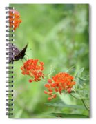 Butterfly A L'orange Spiral Notebook