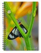 Butterfly An3597-13 Spiral Notebook