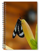 Butterfly An3606-13 Spiral Notebook
