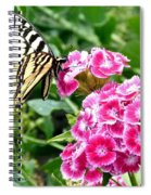 Butterfly And Sweet Williams Spiral Notebook