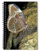Butterfly At Night Spiral Notebook