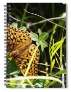 Butterfly At Signal Mountain Spiral Notebook