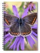 Butterfly Beauty Spiral Notebook