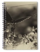 Butterfly Black 06 In Heirloom Finish Spiral Notebook