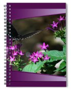 Butterfly Black 16 By 20 Spiral Notebook