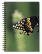 Butterfly E. Black Swallowtail Spiral Notebook