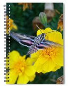 Butterfly Moth Spiral Notebook