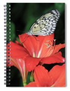 Butterfly On A Lily Spiral Notebook