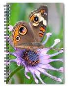 Butterfly On African Daisy Spiral Notebook