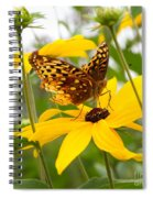 Butterfly On Blackeyed Susan Spiral Notebook