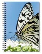 Butterfly On Blue Spiral Notebook