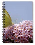 Butterfly On Buddleia Spiral Notebook