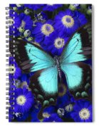 Butterfly On Cineraria Spiral Notebook