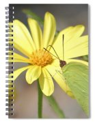 Butterfly On Daisy Spiral Notebook